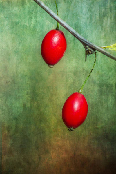 Wall Art - Photograph - Nature's Baubles by Dale Kincaid