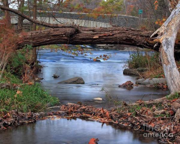 Photograph - Nature's Bridge by Rod Best