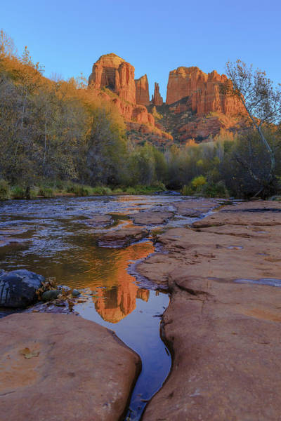Photograph - Natures Cathedral by Scott Campbell