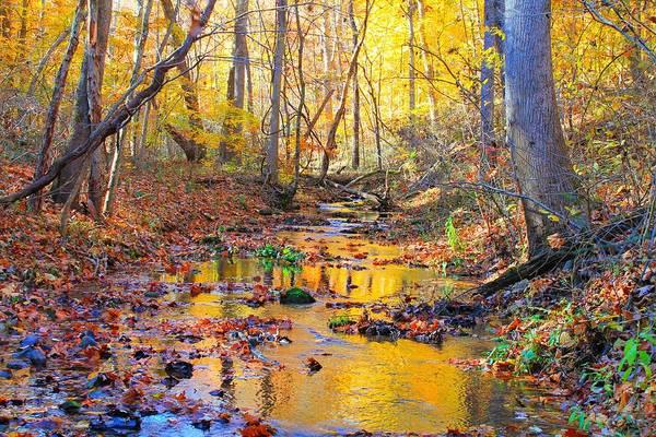 Photograph - Nature's Color Palette by Candice Trimble