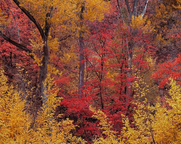 Photograph - Natures Color Palette by Leland D Howard