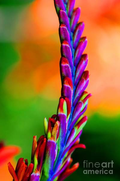 Photograph - Nature's Colors by Tap On Photo