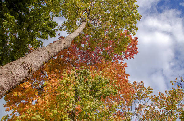 Photograph - Natures Fall Colors by Julie Palencia