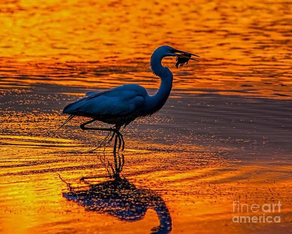 Photograph - Natures Fisherman by Nick Zelinsky