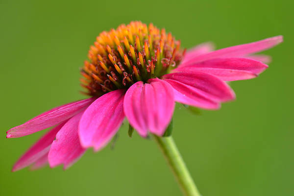Photograph - Nature's Gift by Melanie Moraga