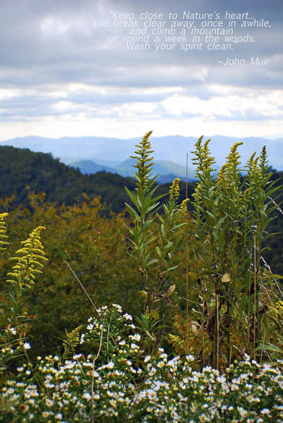 Photograph - Nature's Heart Smoky Mountains Tennessee  by Terry DeLuco