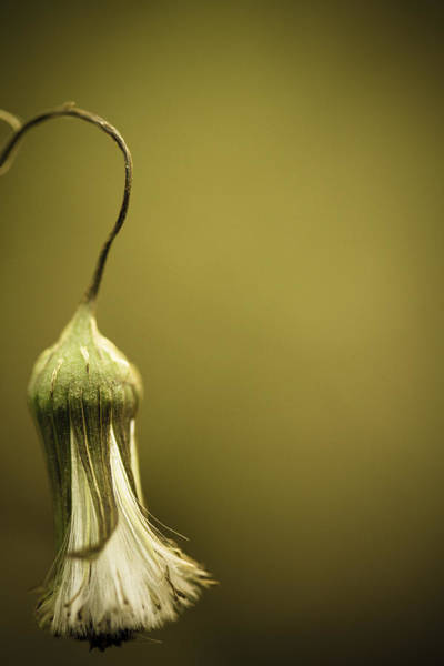 Wall Art - Photograph - Nature's Little Lamp by Shane Holsclaw