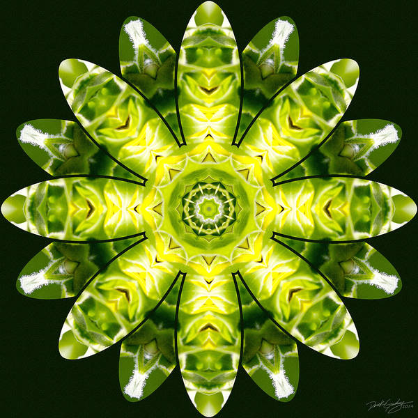 Digital Art - Nature's Mandala 12 by Derek Gedney