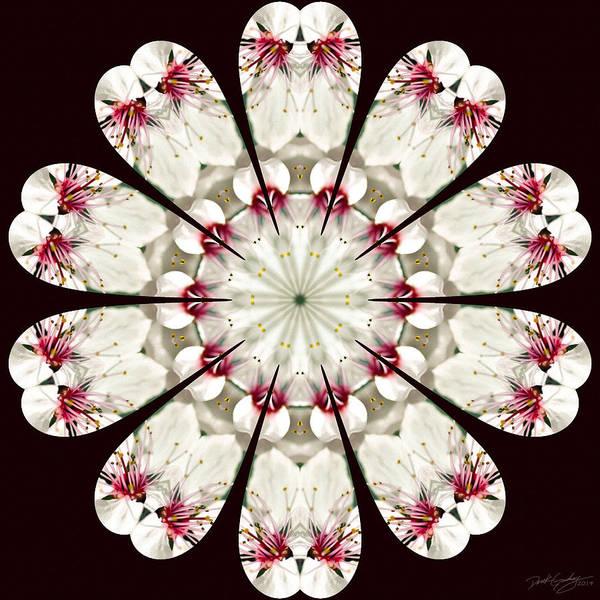 Digital Art - Nature's Mandala 13 by Derek Gedney