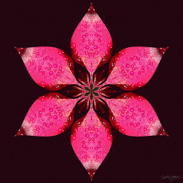 Digital Art - Nature's Mandala 25 by Derek Gedney