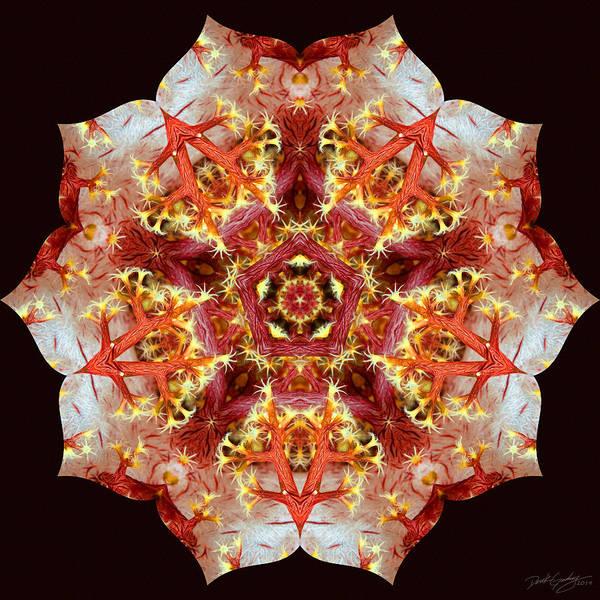 Digital Art - Nature's Mandala 33 by Derek Gedney