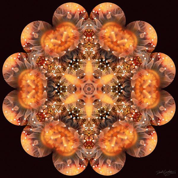 Digital Art - Nature's Mandala 35 by Derek Gedney