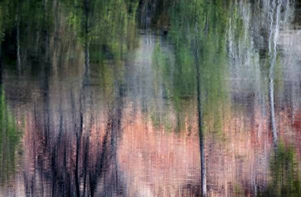 Photograph - Nature's Mirror by Donald J Gray