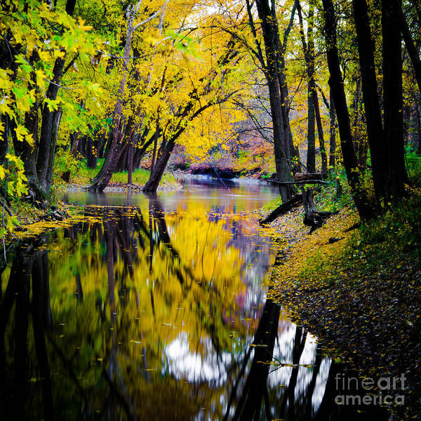 Photograph - Natures Mirror by Michael Arend