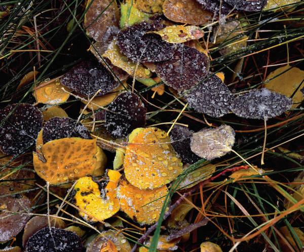 Photograph - Nature's Popsicles by Paul Breitkreuz