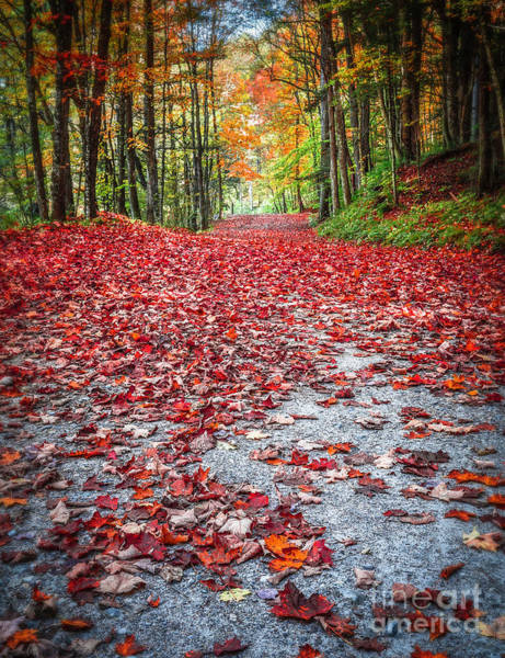 Forestry Photograph - Nature's Red Carpet by Edward Fielding