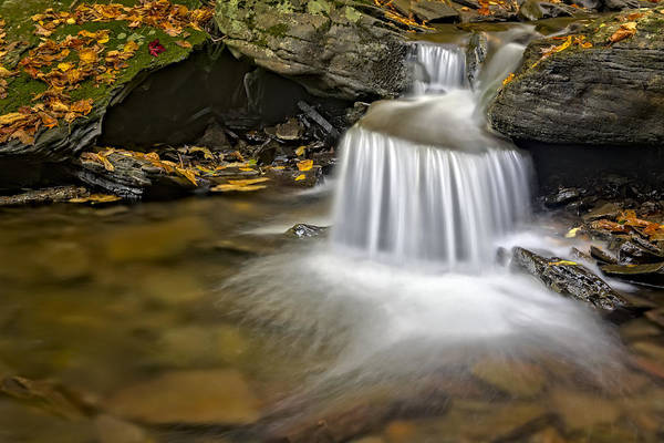 Photograph - Natures Stream by Susan Candelario