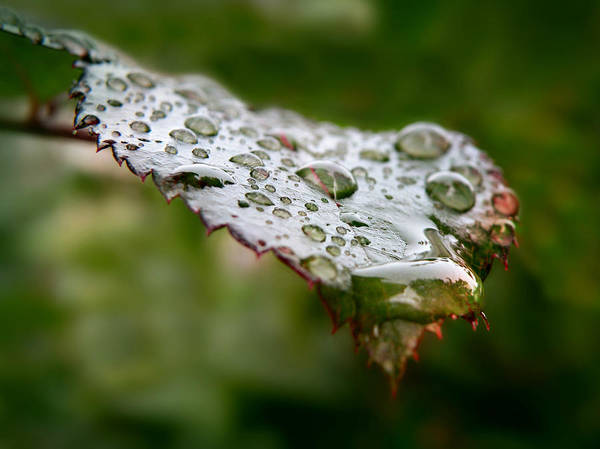 Photograph - Nature's Tears by Micki Findlay