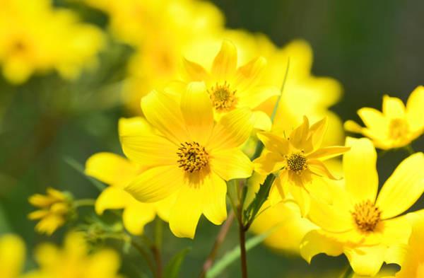 Photograph - Natures Yellow by Lori Tambakis