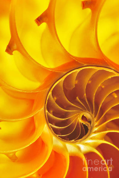 Photograph - Nautilus Shell by Frans Lanting MINT Images