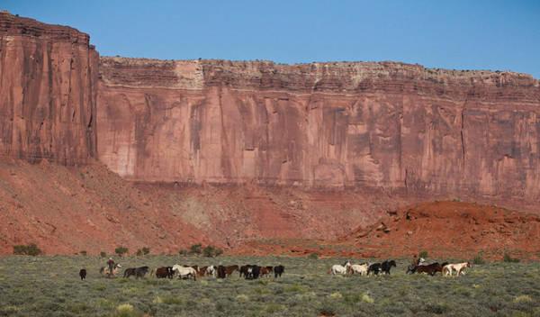Photograph - Navajo Mustangs by Diane Bohna