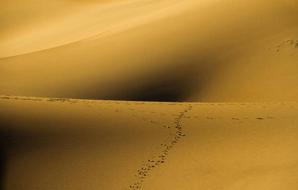Death Valley Np Photograph - Navel Of The Dunes by Kunal Mehra