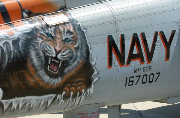 Photograph - Navy Tiger by Jeff Lowe