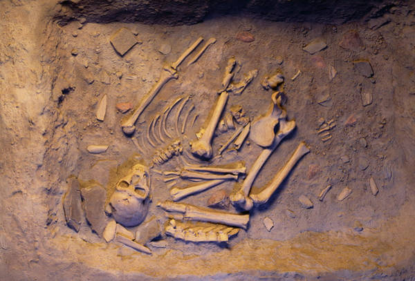 Chapelle Photograph - Neanderthal Bones by Pascal Goetgheluck/science Photo Library