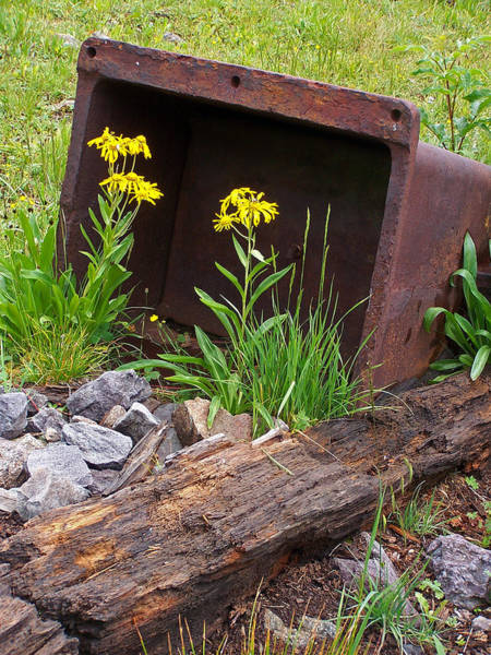 Photograph - Metal Box by Jennifer Robin