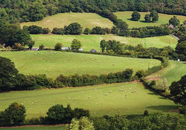 Livestock Photograph - Near Peterchurch, England. Green Fields by Ken Welsh
