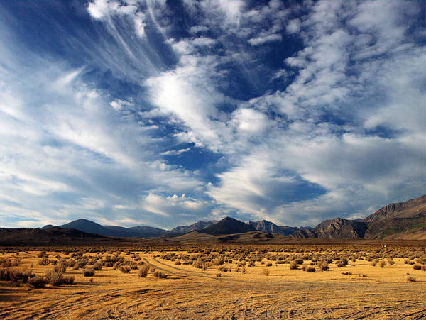 Scrub Photograph - Near The Intersection Of God And The Eastern Sierras by Joe Schofield