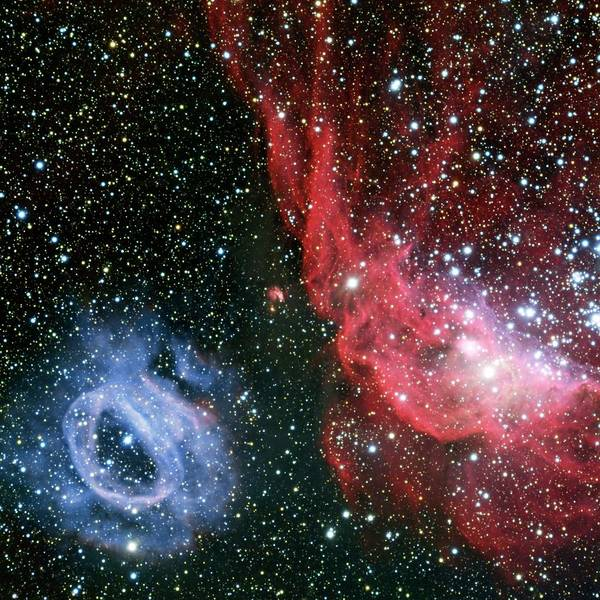 2020 Wall Art - Photograph - Nebulae Ngc 2020 And Ngc 2014 by European Southern Observatory/science Photo Library