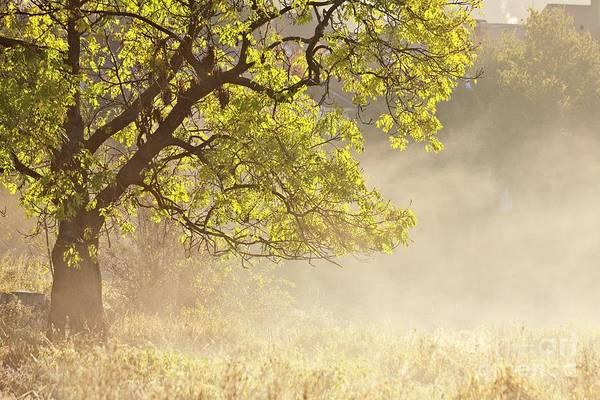 Photograph - Nebulous Tree by Heiko Koehrer-Wagner