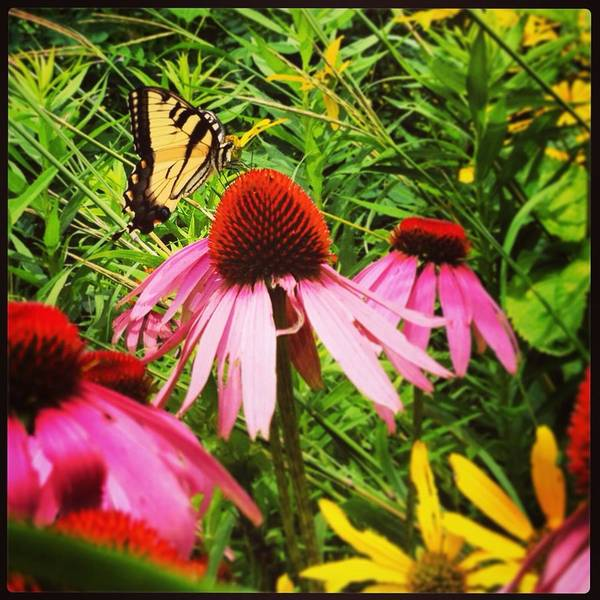 Photograph - Nectar Drinker by Angela Rath