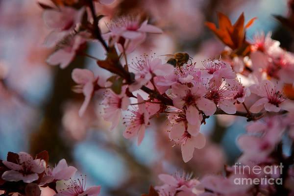 Photograph - Nectar Found by Mark Dodd