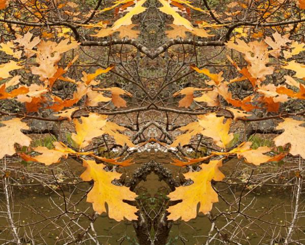 Photograph - Needed Double Autumn 2013 by James Warren