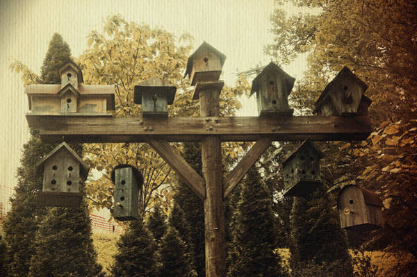 Empty Nest Wall Art - Photograph - Neighborhood Flock by Laurie Perry