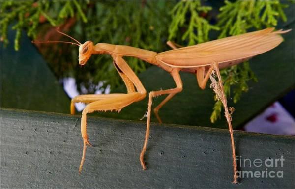 Neighborly Mantis Art Print