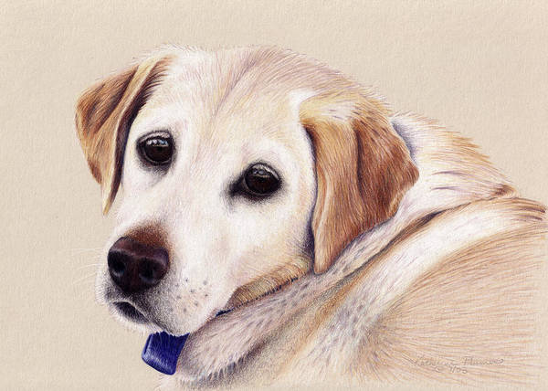 Wall Art - Drawing - Nellie by Katherine Plumer