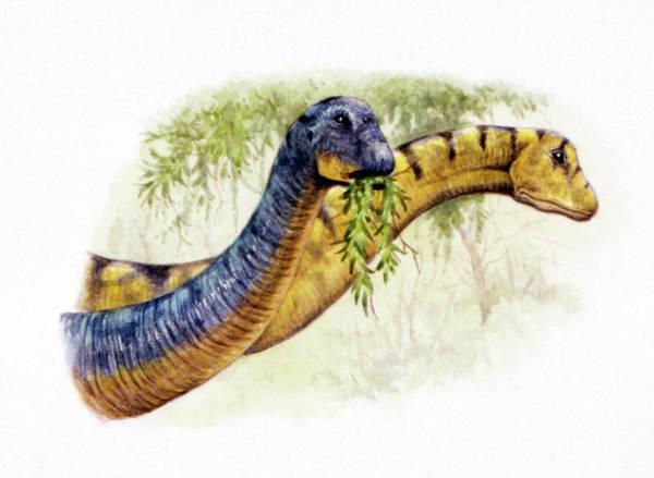 Palaeozoology Wall Art - Photograph - Nemegtosaurus Dinosaurs by Deagostini/uig