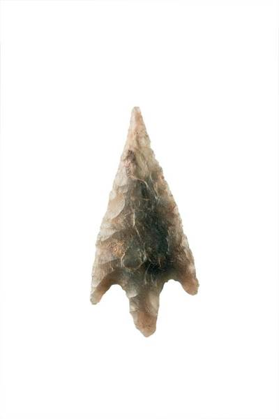 Prehistoric Photograph - Neolithic Arrowhead by Geoff Kidd/science Photo Library