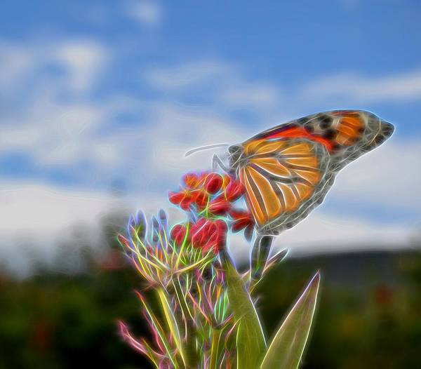 Photograph - Neon Butterfly by Kathy McCabe