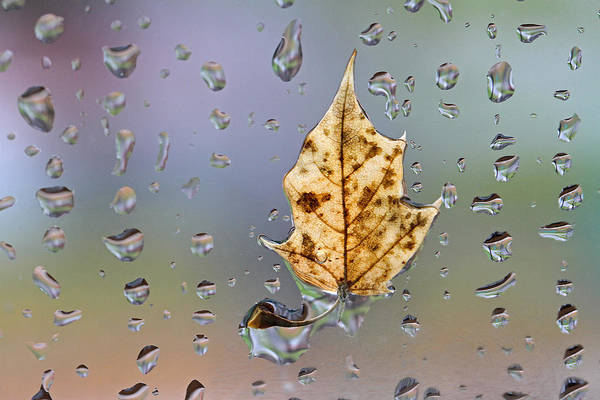 Photograph - Neon Leaf by Juergen Roth