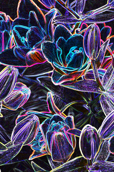Photograph - Neon Lilies by Tine Nordbred
