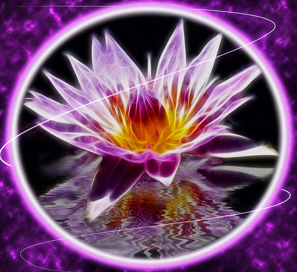 Photograph - Neon Lotus by Shane Bechler