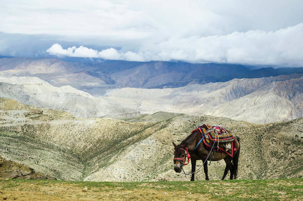 Resting Photograph - Nepalese Horse Rests On A Mountain Pass by Sergey Orlov / Design Pics
