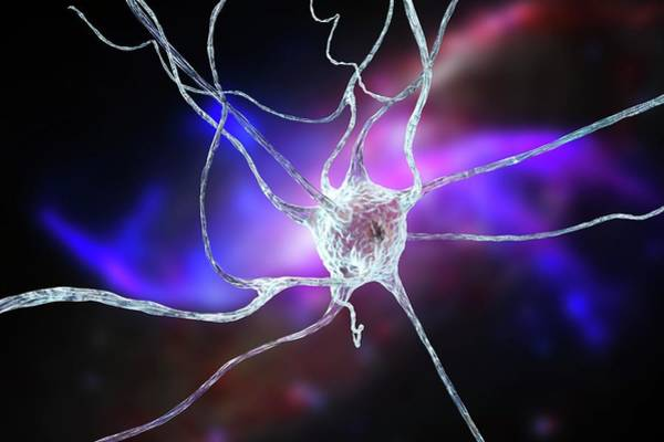 Neurobiology Photograph - Nerve Cell by Kateryna Kon/science Photo Library