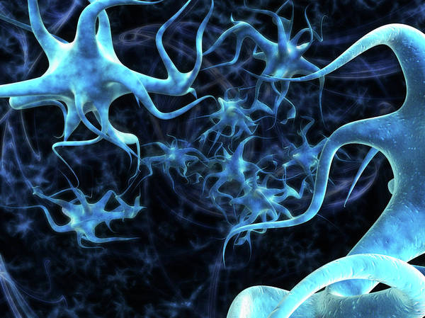 Neuron Wall Art - Photograph - Nerve Cells by Gunilla Elam/science Photo Library
