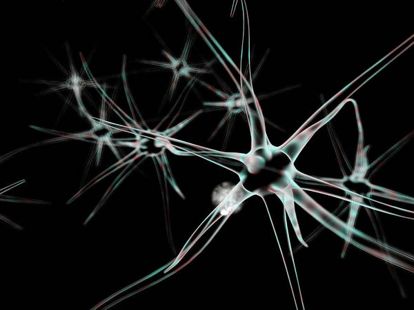 Axon Wall Art - Photograph - Nerve Cells by Harvinder Singh