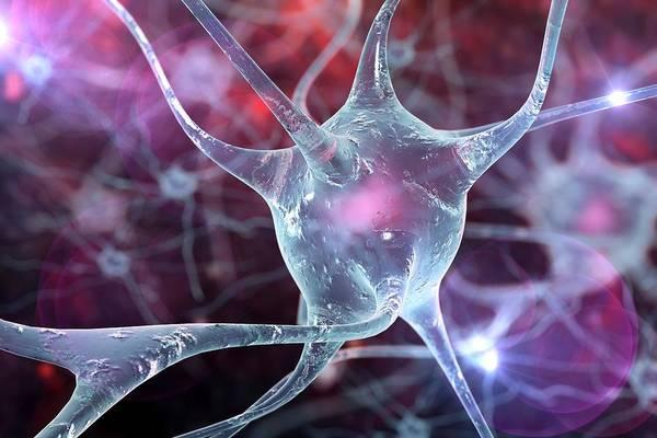Neurobiology Photograph - Nerve Cells by Kateryna Kon/science Photo Library